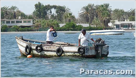 de harina de pescado, aceite de pescado y conserva de pescado