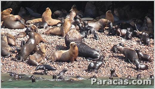 Paracas Peru Dichtungen